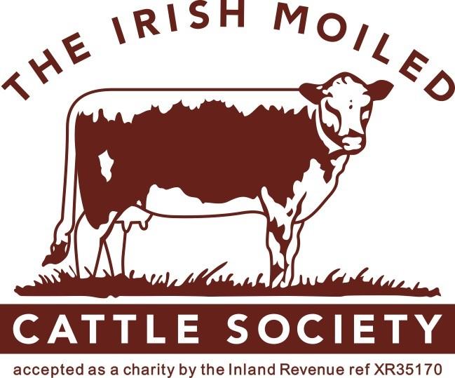 Irish Moiled International Online Cattle Show - Haltered