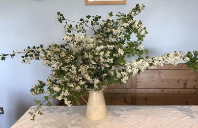 show_1324/thumbnail-Domestic_hedgerow_flowers_knWHmJ3.jpg