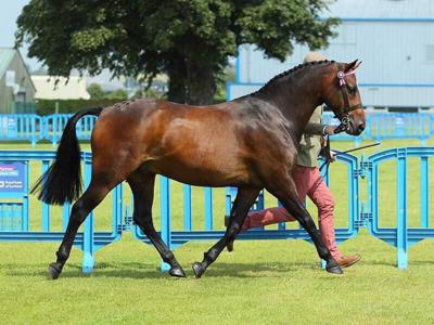 show_3307/thumbnail-InHand_Part_Bred.jpg