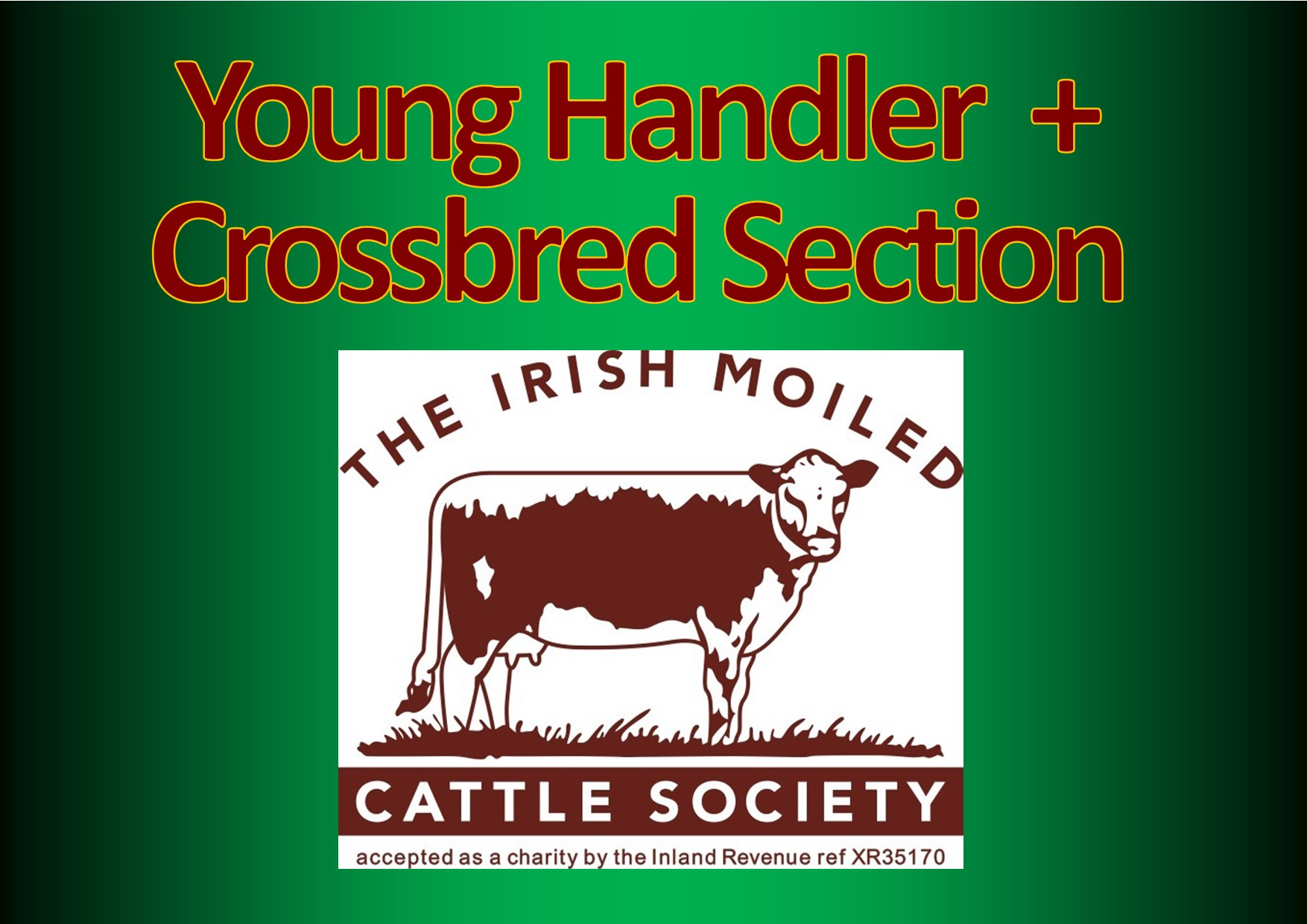 Irish Moiled International Online Cattle Show - Young Handlers and Crossbreds